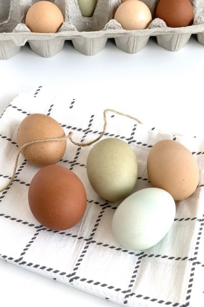 colorful farm fresh eggs from backyard chickens