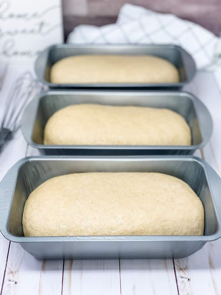 shaped whole wheat bread dough placed in bread pans